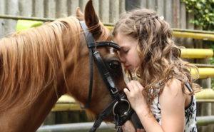 HORSE HEALING
