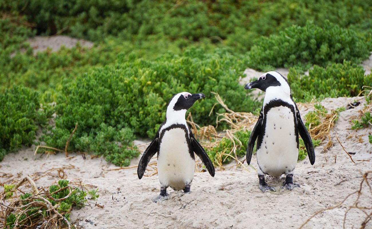 Family Travel: Where Penguins Play