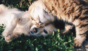 ADOPTION ADVICE FOR NEW PET PARENTS