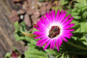 10 WAYS TO CREATE A BEE-FRIENDLY GARDEN